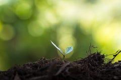 Φυτεψτε τα σπορόφυτα ενός δέντρων φυσικού υποβάθρου εγκαταστάσεων καφέ πράσινο σε φρέσκο φύσης Στοκ εικόνες με δικαίωμα ελεύθερης χρήσης