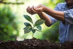 Φυτεψτε τα σπορόφυτα ενός δέντρων φυσικού υποβάθρου εγκαταστάσεων καφέ πράσινο σε φρέσκο φύσης Στοκ Εικόνα