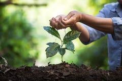 Φυτεψτε τα σπορόφυτα ενός δέντρων φυσικού υποβάθρου εγκαταστάσεων καφέ πράσινο σε φρέσκο φύσης Στοκ Εικόνες