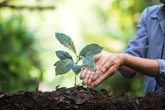 Φυτεψτε τα σπορόφυτα ενός δέντρων φυσικού υποβάθρου εγκαταστάσεων καφέ πράσινο σε φρέσκο φύσης Στοκ φωτογραφία με δικαίωμα ελεύθερης χρήσης