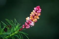 φυτεψτε το ροζ μελιού μ&eps στοκ φωτογραφίες