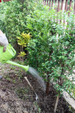Φυτεύει ένα δέντρο Στοκ εικόνες με δικαίωμα ελεύθερης χρήσης