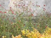 Φυτεύει τα ανθίζοντας τριαντάφυλλα και το κιτρίνισμα spirea με θάμνους Στοκ φωτογραφία με δικαίωμα ελεύθερης χρήσης