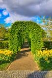 Φυτεύει την πράσινη αλέα με τις κίτρινες τουλίπες, πάρκο Keukenhof, Lisse στην Ολλανδία με θάμνους Στοκ Εικόνες