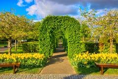 Φυτεύει την πράσινη αλέα με τις κίτρινες τουλίπες, πάρκο Keukenhof, Lisse στην Ολλανδία με θάμνους Στοκ εικόνα με δικαίωμα ελεύθερης χρήσης