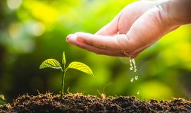 Φυτεύοντας την προσοχή δέντρων δέντρων εκτός από τον κόσμο, τα χέρια προστατεύουν τα σπορόφυτα στη φύση και το φως του βραδιού Στοκ φωτογραφία με δικαίωμα ελεύθερης χρήσης