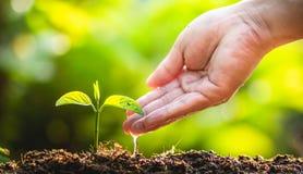 Φυτεύοντας την προσοχή δέντρων δέντρων εκτός από τον κόσμο, τα χέρια προστατεύουν τα σπορόφυτα στη φύση και το φως του βραδιού Στοκ Εικόνες