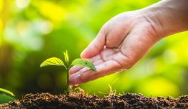 Φυτεύοντας την προσοχή δέντρων δέντρων εκτός από τον κόσμο, τα χέρια προστατεύουν τα σπορόφυτα στη φύση και το φως του βραδιού Στοκ εικόνες με δικαίωμα ελεύθερης χρήσης