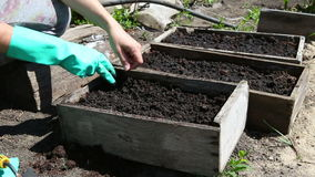 Φυτεύοντας τους σπόρους για να καλλιεργήσει κρεβάτι απόθεμα βίντεο