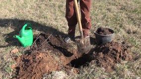 Φυτεύοντας το δέντρο μηλιάς καλλιεργήστε την άνοιξη απόθεμα βίντεο
