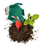 Φυτεύσιμο φυτάριο των εργαλείων δέντρων και κήπων Στοκ Φωτογραφία