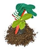 Φυτεύσιμο φυτάριο των εργαλείων δέντρων και κήπων Στοκ φωτογραφίες με δικαίωμα ελεύθερης χρήσης