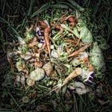 Φυτικά απόβλητα Στοκ φωτογραφίες με δικαίωμα ελεύθερης χρήσης