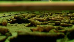 Φυτικά πατάτες και καρότα καταστημάτων στο μεταφορέα απόθεμα βίντεο