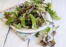 Φυτικά πράσινα σαλάτας Στοκ εικόνες με δικαίωμα ελεύθερης χρήσης