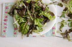 Φυτικά πράσινα σαλάτας Στοκ Εικόνα