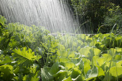 Φυτικές κρεβάτι και βροχή Στοκ Φωτογραφία