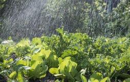 Φυτικές κρεβάτι και βροχή Στοκ Εικόνα