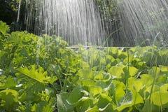 Φυτικές κρεβάτι και βροχή Στοκ φωτογραφία με δικαίωμα ελεύθερης χρήσης