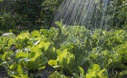 Φυτικές κρεβάτι και βροχή Στοκ εικόνες με δικαίωμα ελεύθερης χρήσης