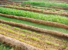 Φυτική έννοια αγροτικής γεωργίας Στοκ Εικόνες