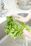 φυτική γυναίκα πλύσης χερ Στοκ Φωτογραφία