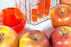 Φυτική δοκιμή, γενετική τροποποίηση, μήλο Στοκ Εικόνες