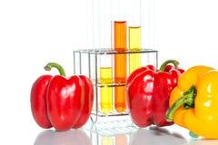Φυτική δοκιμή, γενετική τροποποίηση, πιπέρι Στοκ εικόνες με δικαίωμα ελεύθερης χρήσης