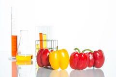 Φυτική δοκιμή, γενετική τροποποίηση, πιπέρι Στοκ Φωτογραφία