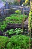 Φυτικός κήπος εγκαταστάσεων/λαχανικό στο χώμα/οργανικό φυτοφάρμακο για τα λαχανικά Στοκ Εικόνα