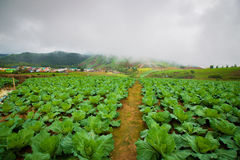 Φυτικός κήπος στην Ταϊλάνδη στο phutubberk Στοκ φωτογραφία με δικαίωμα ελεύθερης χρήσης
