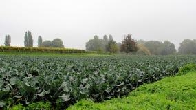 Φυτικός κήπος τομέων σαλάτας με την υδρονέφωση πρωινού Στοκ φωτογραφία με δικαίωμα ελεύθερης χρήσης