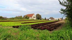 Φυτικός κήπος τομέων σαλάτας Στοκ φωτογραφία με δικαίωμα ελεύθερης χρήσης