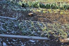Φυτικός κήπος το χειμώνα στοκ φωτογραφίες
