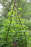 Φυτικός κήπος στοκ φωτογραφία
