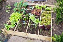 Φυτικός κήπος στοκ εικόνα με δικαίωμα ελεύθερης χρήσης
