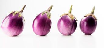 Φυτικός Στοκ εικόνες με δικαίωμα ελεύθερης χρήσης