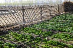 Φυτικό αγροτικό έδαφος με τη φραγή Στοκ εικόνες με δικαίωμα ελεύθερης χρήσης