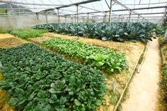 Φυτικό αγρόκτημα Στοκ Εικόνες