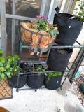 Φυτικό δοχείο διατροφής σαλάτας κήπων στοκ φωτογραφία με δικαίωμα ελεύθερης χρήσης