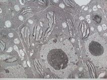 Φυτικό κύτταρο στοκ εικόνες