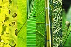 Φυτικό πράσινο διαβαθμιστικό κολάζ, έννοια χρώματος φύσης Στοκ Εικόνες