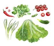 Φυτικό σύνολο watercolor Στοκ Εικόνες