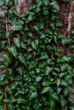 Φυτικό υπόβαθρο των πράσινων φύλλων Στοκ Εικόνα