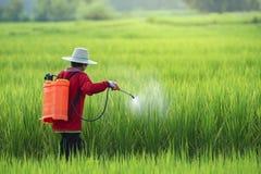 Φυτοφάρμακο, αγρότες που ψεκάζει το φυτοφάρμακο στον τομέα ρυζιού που φορά τη προστατευτική ενδυμασία στοκ φωτογραφίες