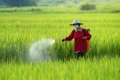 Φυτοφάρμακο, αγρότες που ψεκάζει το φυτοφάρμακο στον τομέα ρυζιού που φορά τη προστατευτική ενδυμασία στοκ φωτογραφία