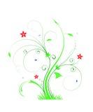 Φυτό άνοιξη ελεύθερη απεικόνιση δικαιώματος