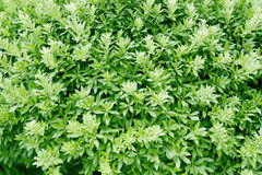 φυτό ανασκόπησης Στοκ Εικόνες