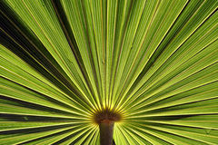 φυτό ανασκόπησης Στοκ εικόνα με δικαίωμα ελεύθερης χρήσης