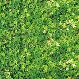 φυτό ανασκόπησης verdant Στοκ εικόνα με δικαίωμα ελεύθερης χρήσης